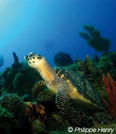 Dossier plongée Destination Guadeloupe #56