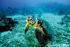 Les incontournables de Guadeloupe ! Plongée sous-marine