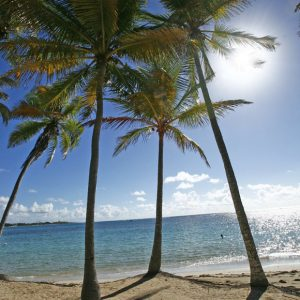 Guadeloupe plage de la Caravelle Sainte-Anne