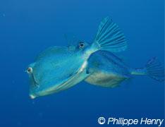 Guadeloupe Plongée Evasion