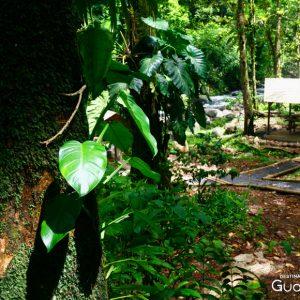 Rivière et forêt tropicale Guadeloupe