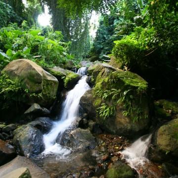 Rivières & forêt tropicale