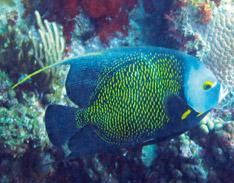 Noa plongée Guadeloupe