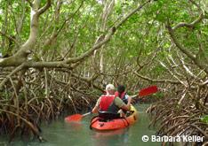 Randonnée kayak en Guadeloupe