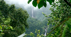 Chutes et cascades Basse-Terre Guadeloupe