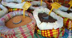 Les marchés de Basse-Terre Guadeloupe