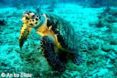 Dossier plongée : randonée aquatique avec An ba Dlola