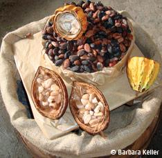 Cacao et chocolat de Guadeloupe