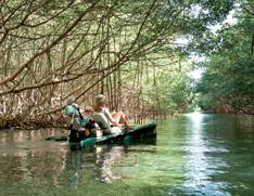 Rando mangrove Guadeloupe