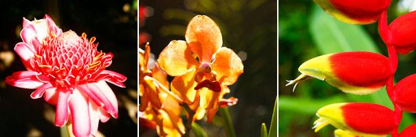 Flore jardin botanique de Deshaies