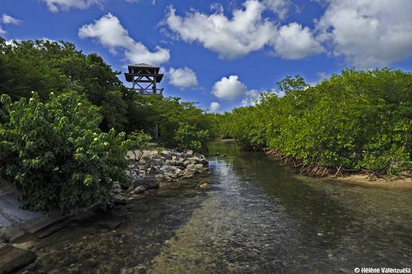 Balade dans le marais de Port-Louis