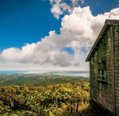 Destination Guadeloupe #59 foret tropicale