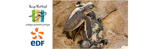 Partenarit pour la protection des tortues marines en Guadeloupe