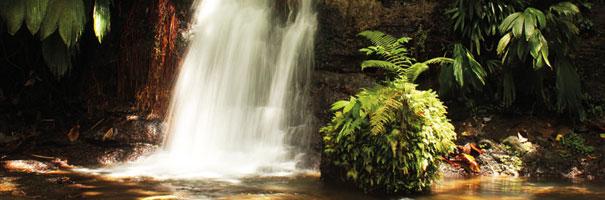 Bassin Colot Guadeloupe